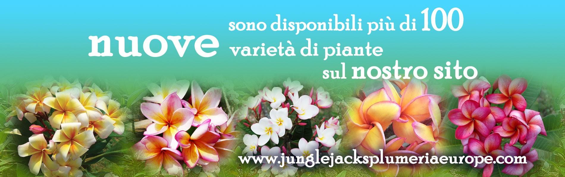 junglejacksplumeriaeurope novità 2018